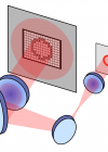 Ring shaped optical trap formed using a digital micro-mirror device.